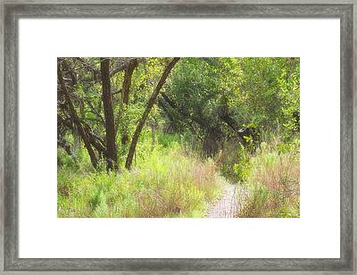 Buttonwood Forest Framed Print by Rudy Umans