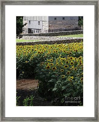 Buttonwood Framed Print