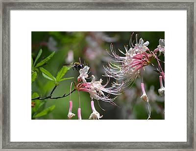 Framed Print featuring the photograph Buzz Buzz by Tara Potts
