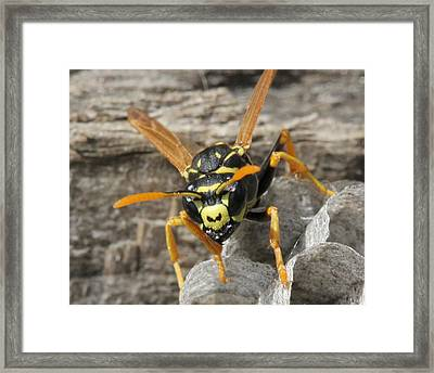 Buzz Off Framed Print