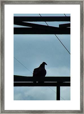 Buzzard On Tower Framed Print by Mark Malitz