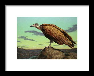 Buzzard Framed Prints