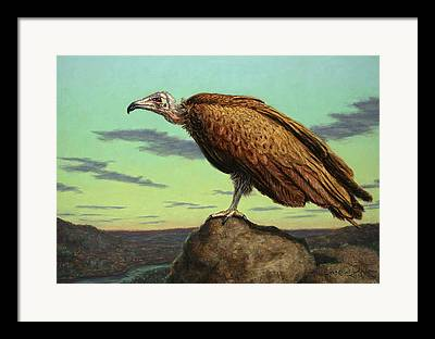 Vulture Framed Prints