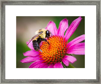 Buzzed In Eureka Springs Framed Print