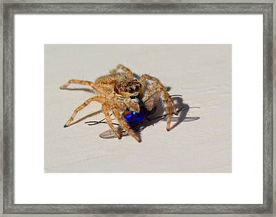 Buzzed Out Framed Print