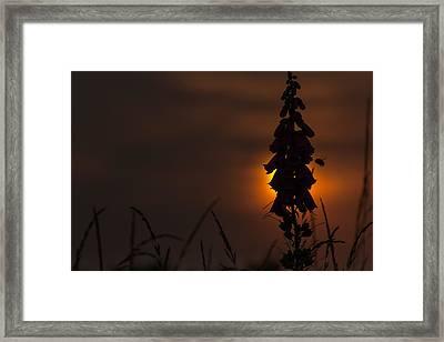 Buzzin' Framed Print