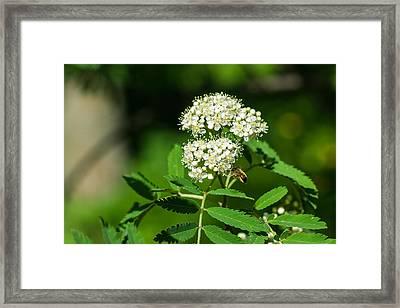 Buzzing Bee Framed Print by Alexander Senin