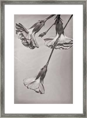 Bw Mini Mum Framed Print