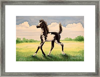 Bw Painted Foal Framed Print by Tish Wynne