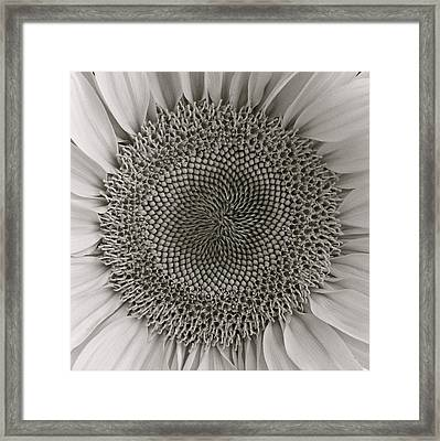 Bw Sunflower Framed Print by Diana Shay Diehl