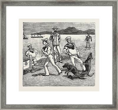 By Jove, Those Dogs Seem To Have Taken Quite A Liking Framed Print by English School