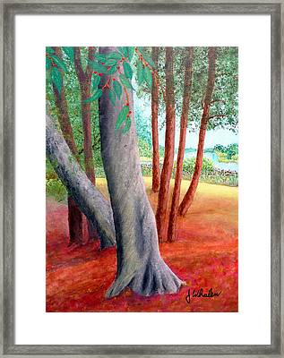 By The Lafayette River Framed Print