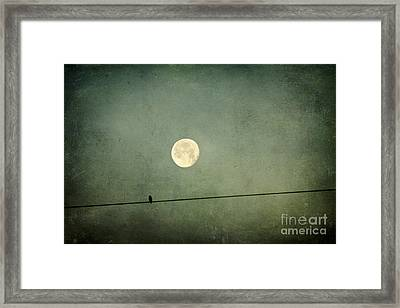 By The Light Of The Moon Framed Print by Joan McCool