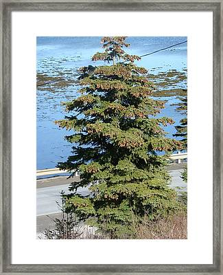 Framed Print featuring the photograph By The Ocean by Zinvolle Art