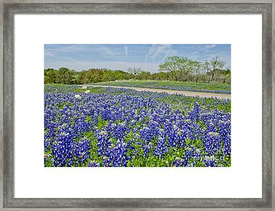 By The Roadside Framed Print