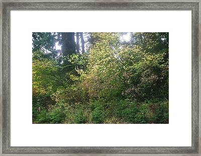 By The Side Of The Road Framed Print