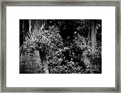 By The Sweet Magic Of Morning  Framed Print by Sharon Mau