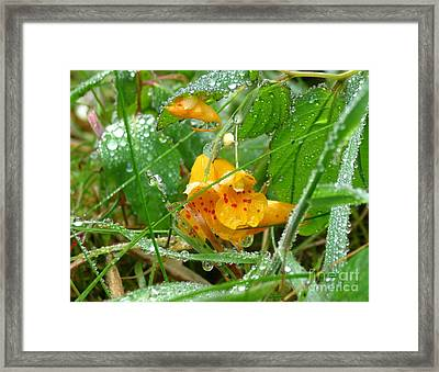 By The Waterfall Framed Print by Gayle Swigart