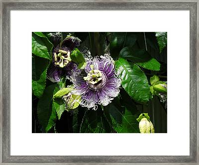 Framed Print featuring the photograph Byron Beauty by Ron Davidson