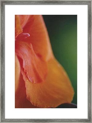 C. Lilly Framed Print by Kennith Mccoy