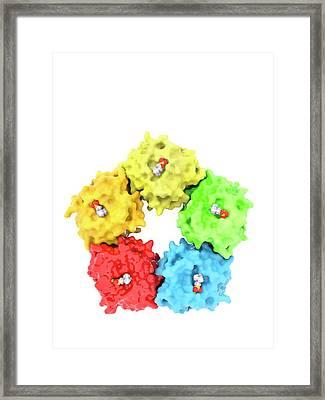 C-reactive Protein Molecule Framed Print