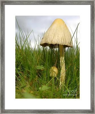 C Ribet Mushroom And Fungus Art 1479 Framed Print