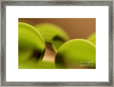 C Ribet Orbscape 0481 Framed Print by C Ribet