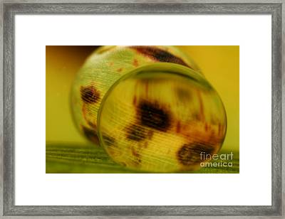 C Ribet Orbscape 0847 Framed Print by C Ribet
