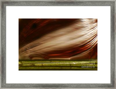 C Ribet Orbscape 1168 Framed Print by C Ribet