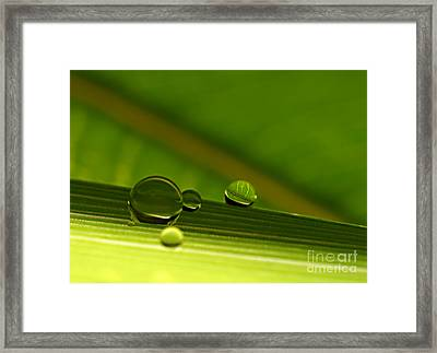 C Ribet Orbscape Leaf Horizon Framed Print by C Ribet