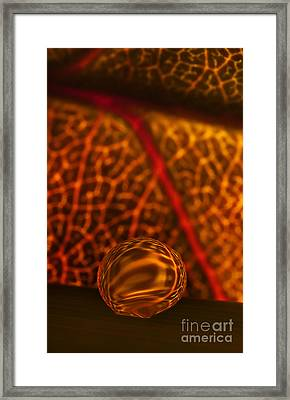 C Ribet Orbscape Naive Breath Framed Print