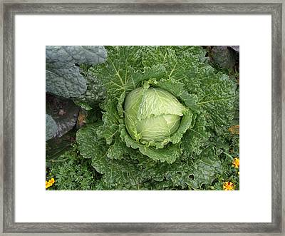 Cabbage And Marigolds Framed Print