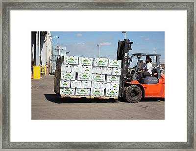 Cabbage Farming Framed Print by Jim West