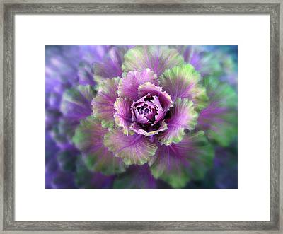 Cabbage Flower Framed Print by Jessica Jenney