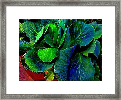 Cabbage Gone Wild Framed Print by Susan Duda