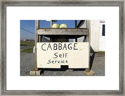Cabbage Self Service Framed Print