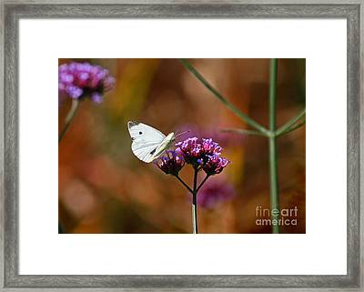 Cabbage White Butterfly In Fall Framed Print by Karen Adams