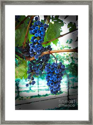 Cabernet Sauvignon Grapes Framed Print by Robert Bales