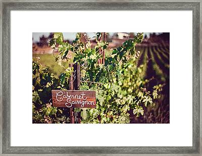 Cabernet Vineyards Framed Print by April Reppucci