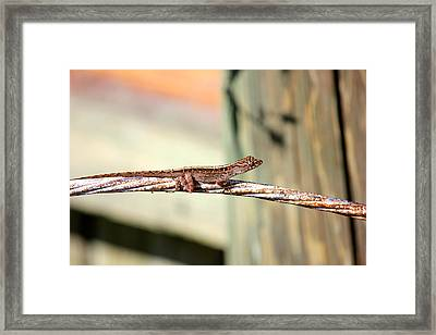 Cable Wire Bridge Framed Print by Cyril Maza