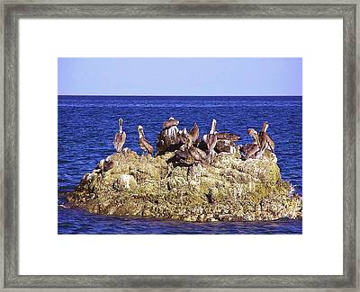 Cabo Pelicans Framed Print