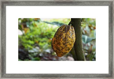 Cacao Plant Framed Print