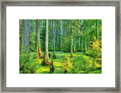 Cache River Swamp Framed Print