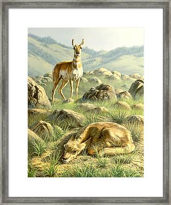 Cached Treasure - Pronghorn Framed Print by Paul Krapf