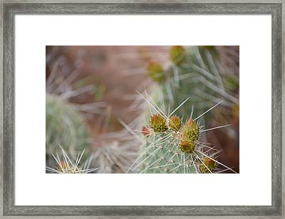 Cacti In Moab Framed Print by Kyle Reynolds