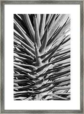 Cactus 1 Framed Print