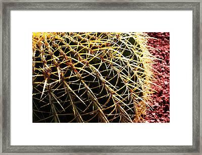 Cactus 10 Framed Print