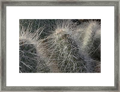 Cactus 12 Framed Print