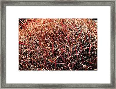 Cactus 13 Framed Print