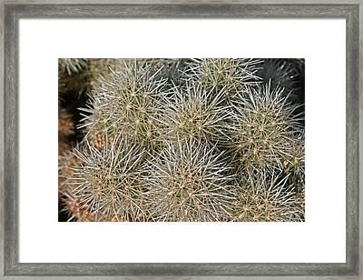 Cactus 14 Framed Print